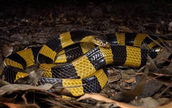Виды-змей-Описание-особенности-названия-и-фото-видов-змей-13