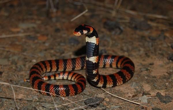 Виды-змей-Описание-особенности-названия-и-фото-видов-змей-14
