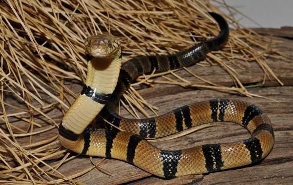 Виды-змей-Описание-особенности-названия-и-фото-видов-змей-15