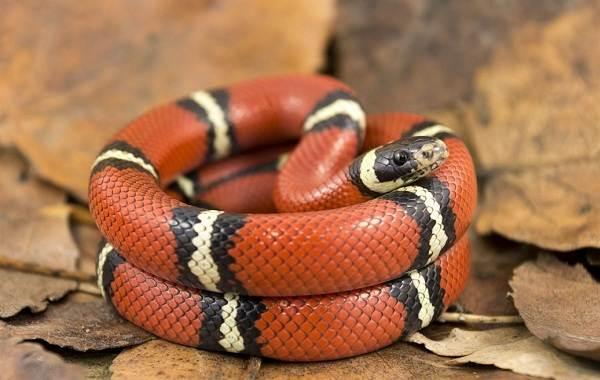 Виды-змей-Описание-особенности-названия-и-фото-видов-змей-17