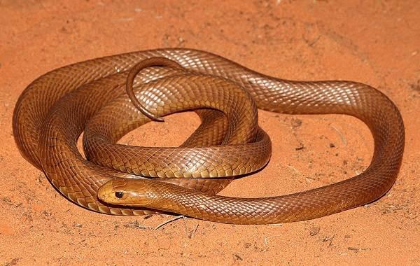 Виды-змей-Описание-особенности-названия-и-фото-видов-змей-18