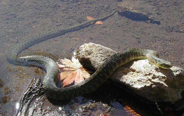 Виды-змей-Описание-особенности-названия-и-фото-видов-змей-2