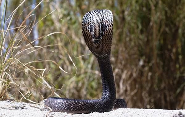 Виды-змей-Описание-особенности-названия-и-фото-видов-змей-20