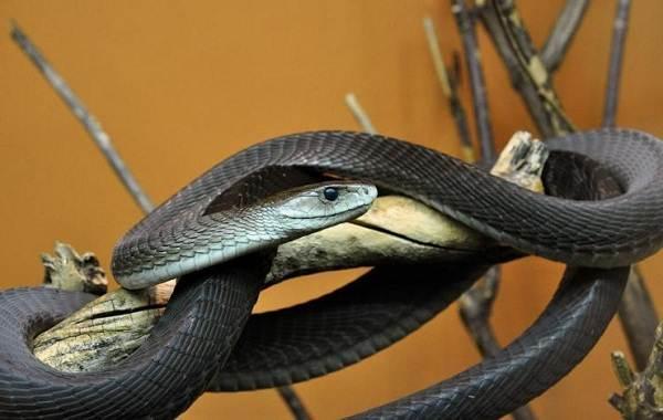 Виды-змей-Описание-особенности-названия-и-фото-видов-змей-21