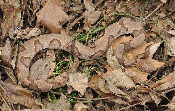 Виды-змей-Описание-особенности-названия-и-фото-видов-змей-22