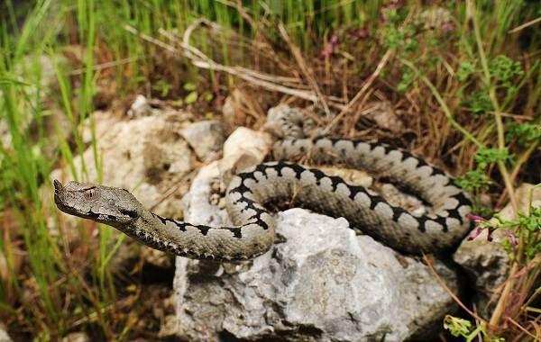Виды-змей-Описание-особенности-названия-и-фото-видов-змей-25