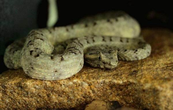 Виды-змей-Описание-особенности-названия-и-фото-видов-змей-27