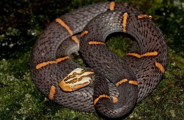 Виды-змей-Описание-особенности-названия-и-фото-видов-змей-28