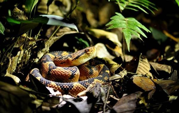 Виды-змей-Описание-особенности-названия-и-фото-видов-змей-30