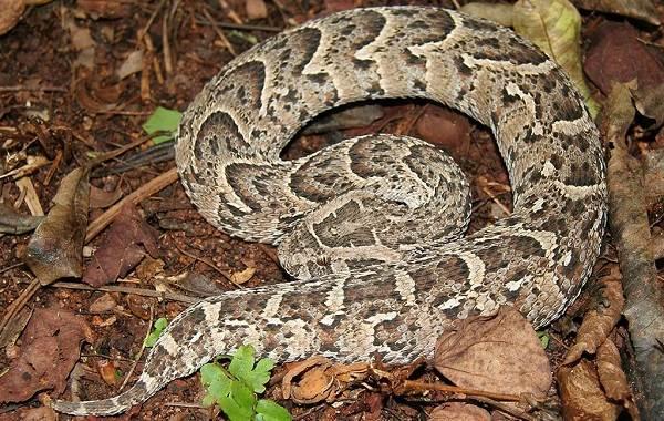 Виды-змей-Описание-особенности-названия-и-фото-видов-змей-32
