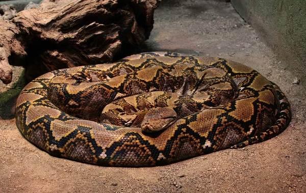 Виды-змей-Описание-особенности-названия-и-фото-видов-змей-38