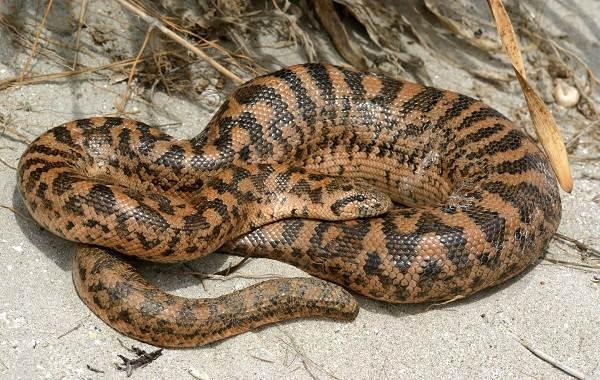 Виды-змей-Описание-особенности-названия-и-фото-видов-змей-42