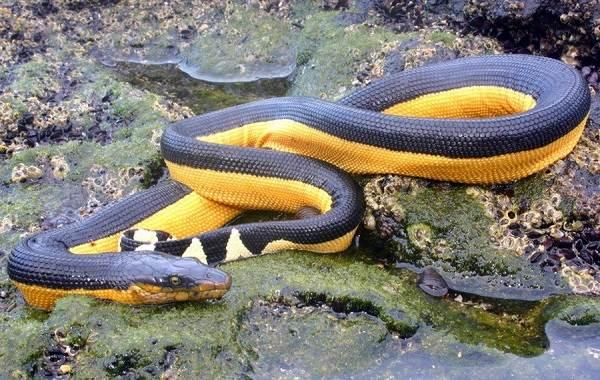 Виды-змей-Описание-особенности-названия-и-фото-видов-змей-43