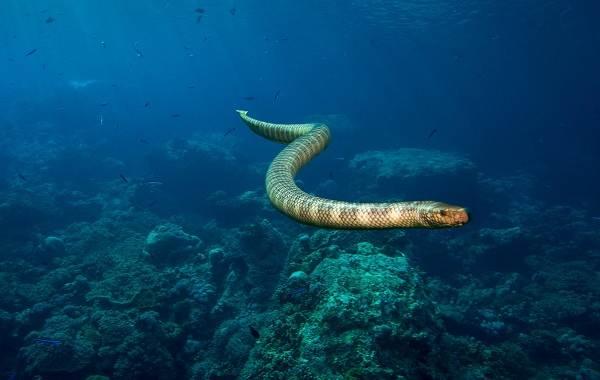 Виды-змей-Описание-особенности-названия-и-фото-видов-змей-44