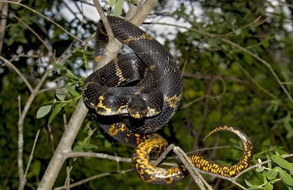 Виды-змей-Описание-особенности-названия-и-фото-видов-змей-5