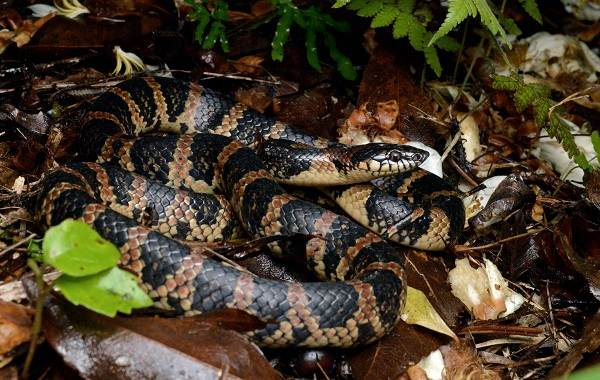 Виды-змей-Описание-особенности-названия-и-фото-видов-змей-6