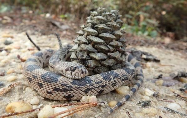 Виды-змей-Описание-особенности-названия-и-фото-видов-змей-8