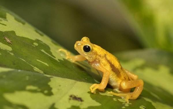 Жаба-животное-Описание-особенности-виды-образ-жизни-и-среда-обитания-жабы-14