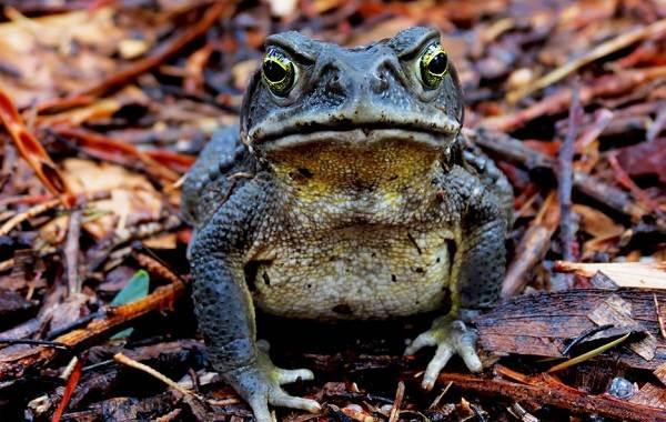 Жаба-животное-Описание-особенности-виды-образ-жизни-и-среда-обитания-жабы-19