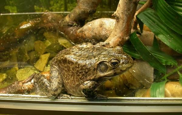 Жаба-животное-Описание-особенности-виды-образ-жизни-и-среда-обитания-жабы-23