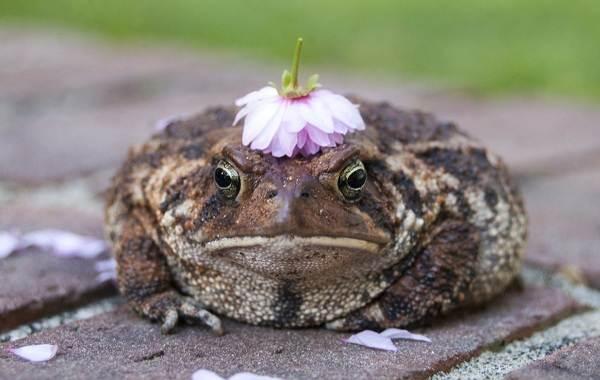 Жаба-животное-Описание-особенности-виды-образ-жизни-и-среда-обитания-жабы-3