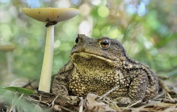Жаба-животное-Описание-особенности-виды-образ-жизни-и-среда-обитания-жабы-5