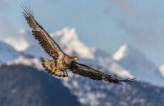 Хищные птицы. Описание, названия, виды и фото хищных птиц