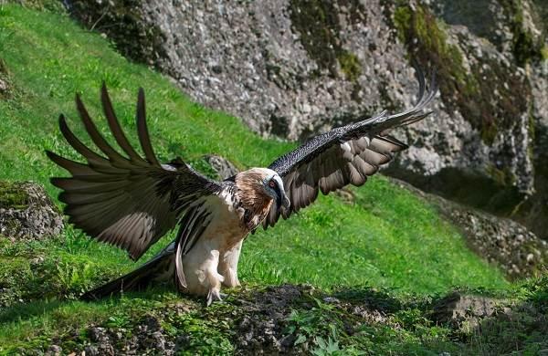 Хищные-птицы-Описание-названия-виды-и-фото-хищных-птиц-10