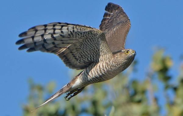 Хищные-птицы-Описание-названия-виды-и-фото-хищных-птиц-18
