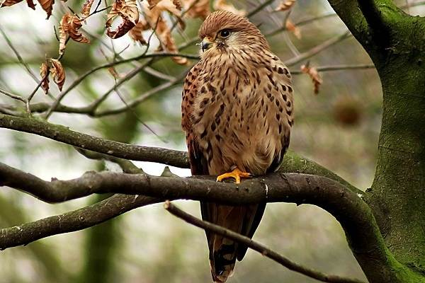 Хищные-птицы-Описание-названия-виды-и-фото-хищных-птиц-27