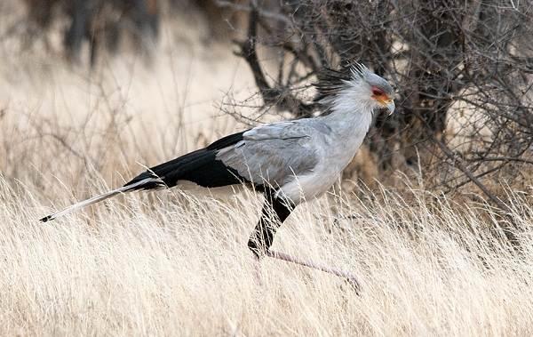 Хищные-птицы-Описание-названия-виды-и-фото-хищных-птиц-31