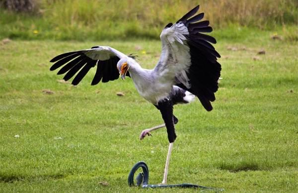 Хищные-птицы-Описание-названия-виды-и-фото-хищных-птиц-32