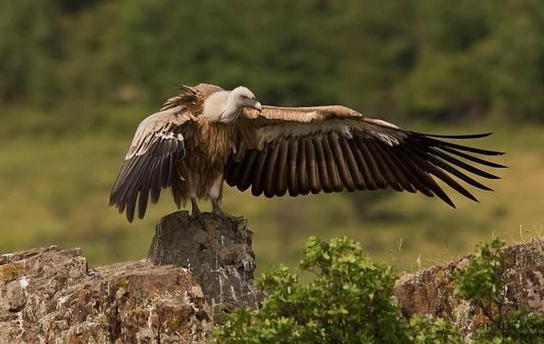 Хищные-птицы-Описание-названия-виды-и-фото-хищных-птиц-4