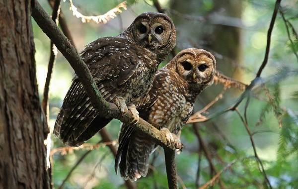 Хищные-птицы-Описание-названия-виды-и-фото-хищных-птиц-40