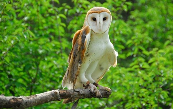 Хищные-птицы-Описание-названия-виды-и-фото-хищных-птиц-43