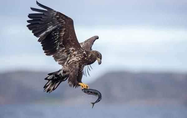Хищные-птицы-Описание-названия-виды-и-фото-хищных-птиц-5