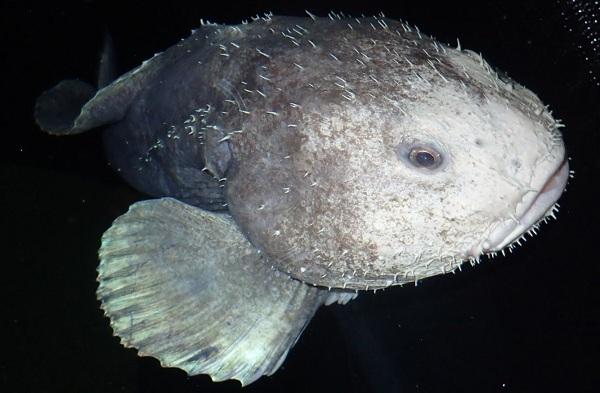 Капля-рыба-Описание-особенности-образ-жизни-и-среда-обитания-рыбы-капли-7