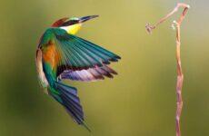 Щурка птица. Описание, особенности, виды, образ жизни и среда обитания щурки