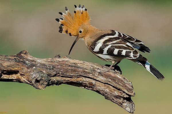 Тропические-птицы-Описание-названия-виды-и-фото-тропических-птиц-11