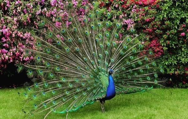 Тропические-птицы-Описание-названия-виды-и-фото-тропических-птиц-14