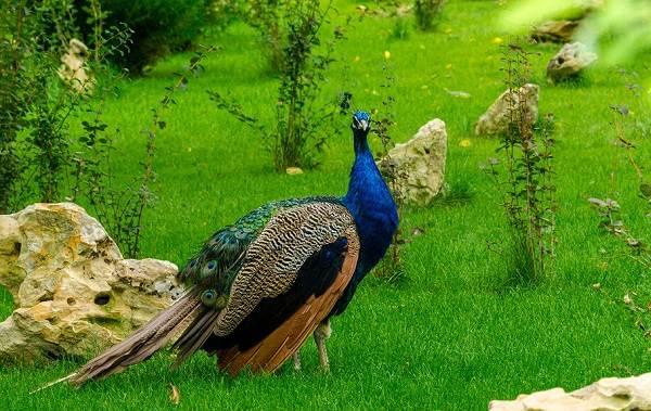 Тропические-птицы-Описание-названия-виды-и-фото-тропических-птиц-15