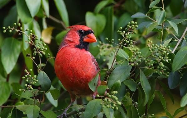 Тропические-птицы-Описание-названия-виды-и-фото-тропических-птиц-16