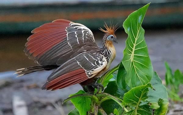 Тропические-птицы-Описание-названия-виды-и-фото-тропических-птиц-17