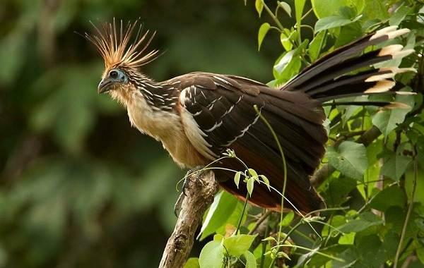 Тропические-птицы-Описание-названия-виды-и-фото-тропических-птиц-18