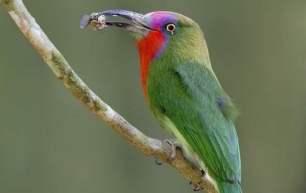 Тропические-птицы-Описание-названия-виды-и-фото-тропических-птиц-19