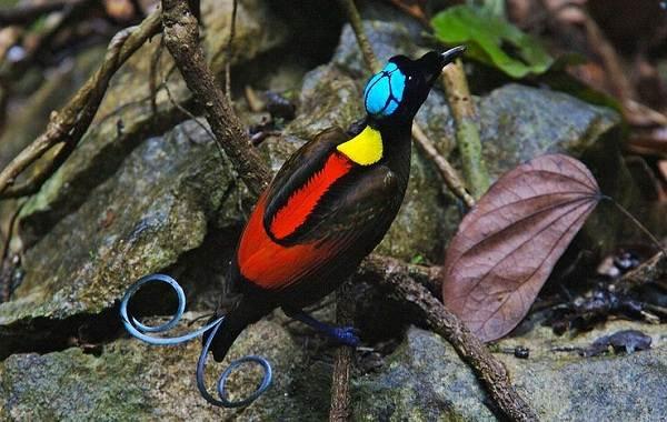 Тропические-птицы-Описание-названия-виды-и-фото-тропических-птиц-2