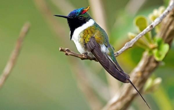 Тропические-птицы-Описание-названия-виды-и-фото-тропических-птиц-21