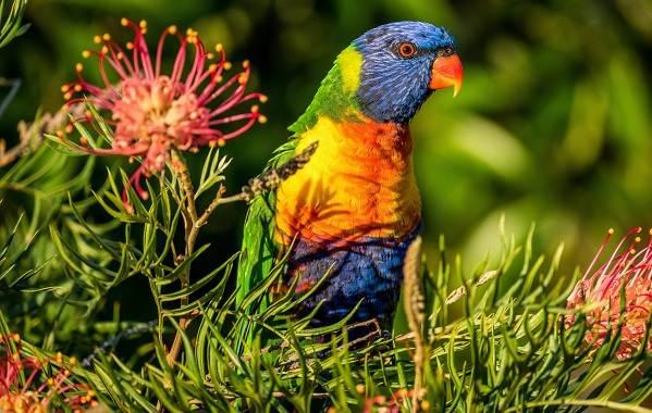 Тропические-птицы-Описание-названия-виды-и-фото-тропических-птиц-23