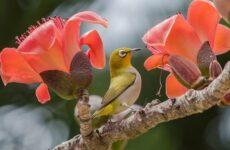 Тропические птицы. Описание, названия, виды и фото тропических птиц