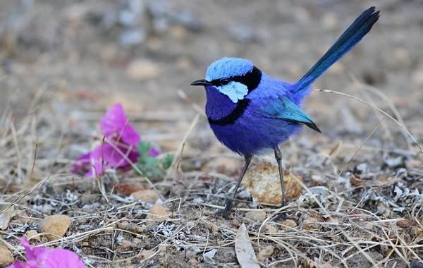 Тропические-птицы-Описание-названия-виды-и-фото-тропических-птиц-27